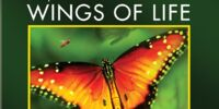 Wings of Life (video)