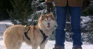 Snow-dogs-disneyscreencaps.com-4920