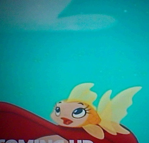 File:Gilly the Goldfish01.jpg