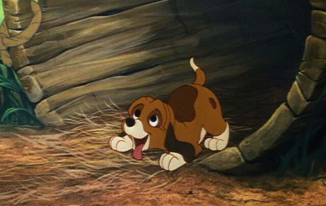 File:Copper Wagging his Tail.jpg