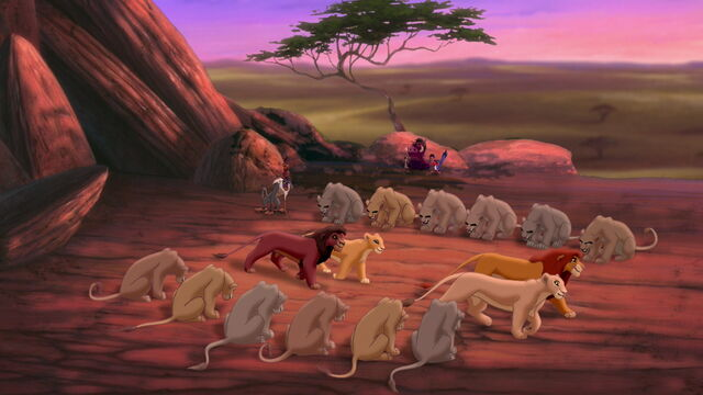 File:81-todas as leoas do bando saúdam Simba e Nala, Kovu e Kiara.jpg