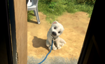 Bolt dog face