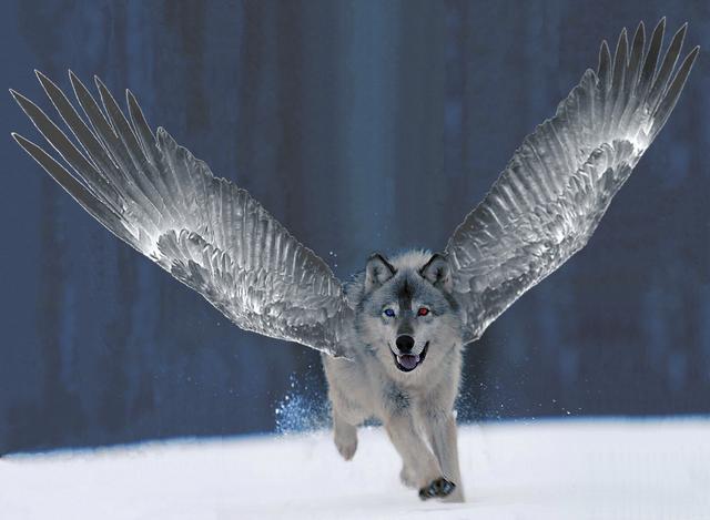 File:Silverflight avatar.png