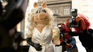 3026984-inline-i-2-muppets-call-new-yorkers-animals