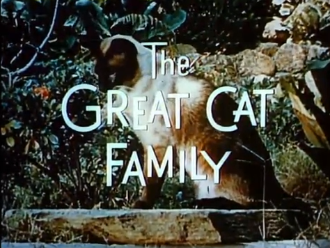 File:CatFamilyTitle.png