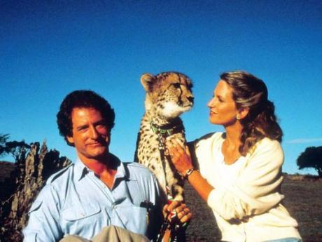 File:Cheetah-1-1.jpg