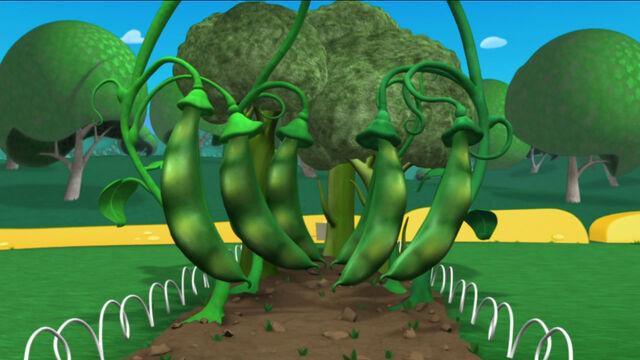File:Giant green beans.jpg