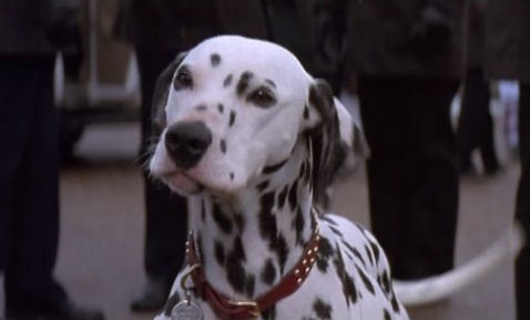 File:Perdita 1996 101 Dalmatians.jpg