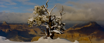 File:1959-canyon-4.jpg