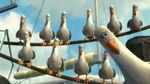 Nemo-Seagulls