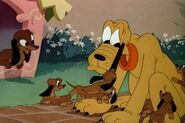 Pluto, Dinah and Puppies