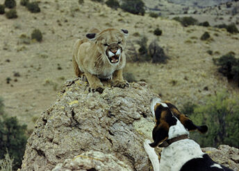 Paco vs Puma