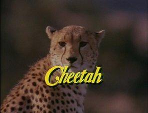 File:Cheetah3.jpg