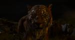 Jungle Book 2016 121