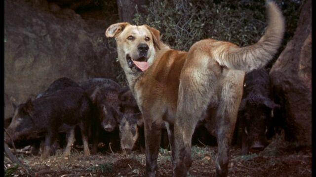File:Old Yeller vs Wild Boars.jpg