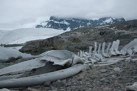 File:Whale Graveyard.jpg