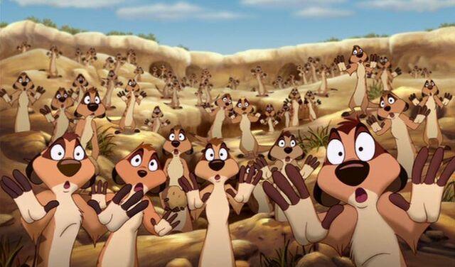 File:Timon's meerkat colony.jpg