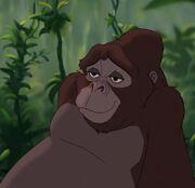 Kala Tarzan