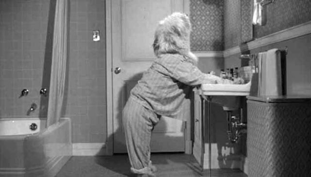 File:Shaggy dog standing at sink.jpg