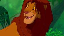 Simba grown up.jpg