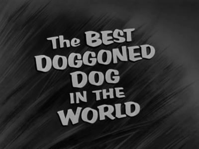 File:1957-doggoned-1.jpg