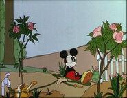 Mickey's Garden-31