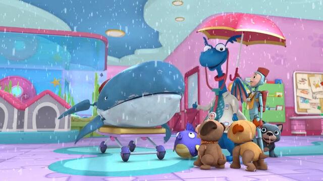 File:Raining in the pet vet clinic.jpg