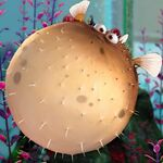 1000px-Bloat-FindingNemo3D