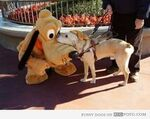 Pluto meets security dog
