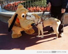 File:Pluto meets security dog.jpg