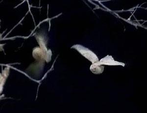 File:Snowbirds.jpg