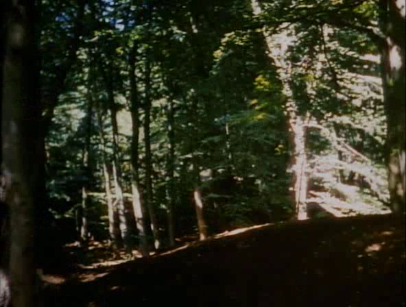 File:Sherwoodforest.png