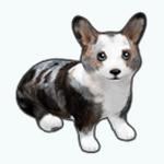 Pets - Dog Zed
