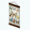 CuriousCuratorDecor - Butterfly Study Chart