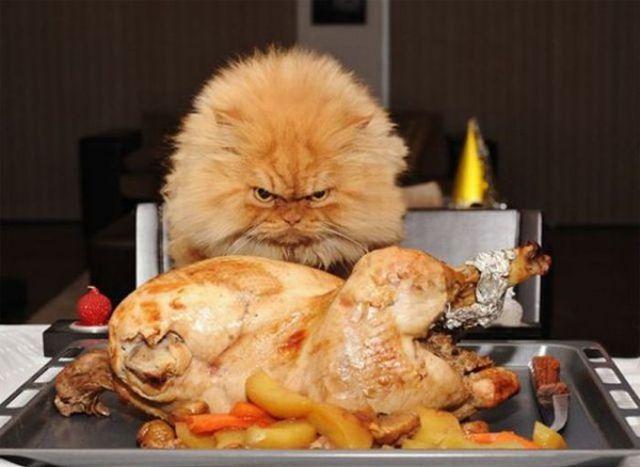 File:Funny-thanksgiving-moments-35-pics-1-gif 1.jpg