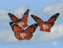 Invitatioin butterflies