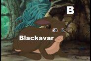 Blackavar