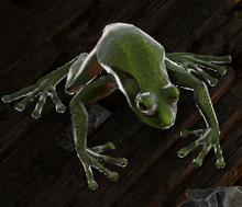 Corrosive Amphibian
