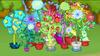 Dizzywood potted plants