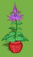 Dizzywood potted rocketflower