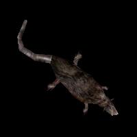 Ob ratdead02.jpg