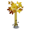 Bewitched Maple