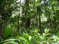 The-rainforest