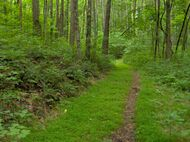 Standing-stone-state-forest-tn1