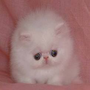 File:Puffball!!.png