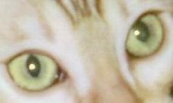 File:Seal Sepia Snow Eyes.jpg