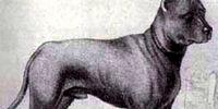 Blue Paul Terrier