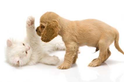 File:Puppy Kitten.jpg