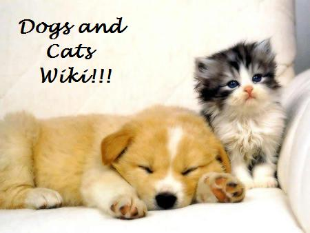 File:Dogs and Cats Wiki.jpg