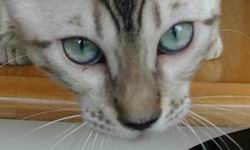 File:Seal Mink Snow Eyes.jpg